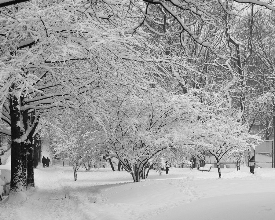 Winter Wonderland in Van Cortlandt Park