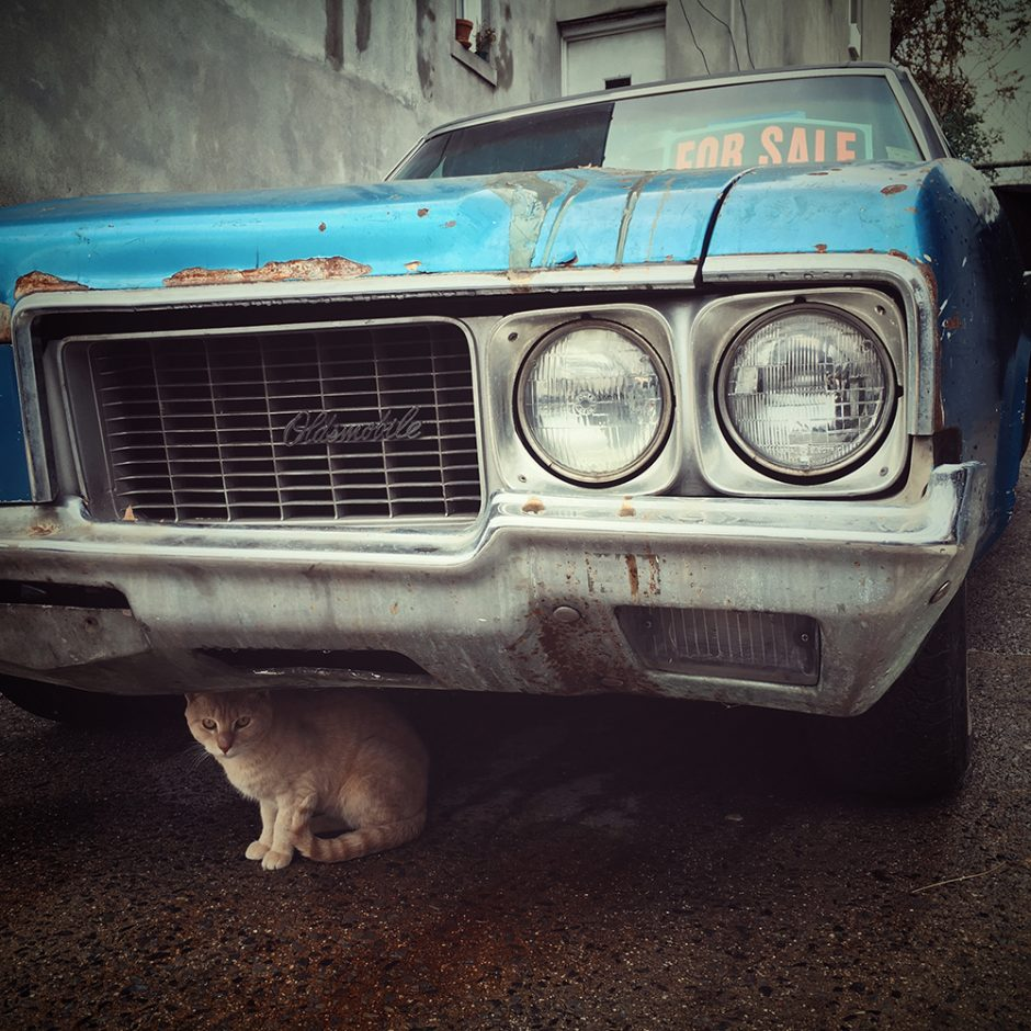 Cars and Cats of the Bronx